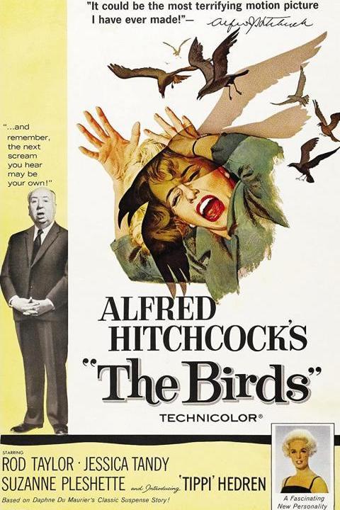 Recensie The Birds (1963)